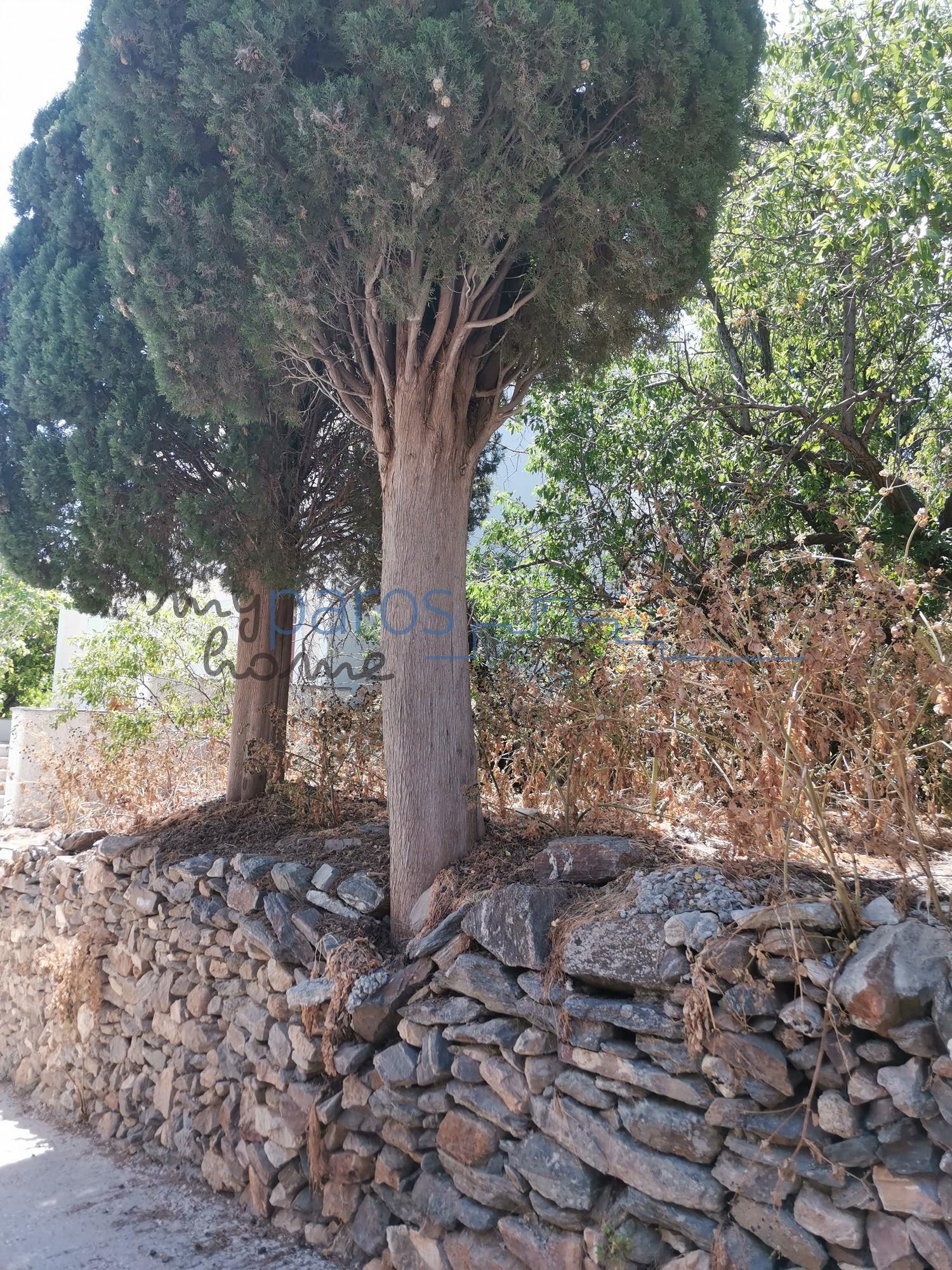 B 239  OIKOΠΕΔΟ ΕΝΤΟΣ ΟΙΚΙΣΜΟΥ ΛΕΥΚΩΝ ΠΑΡΟΥ